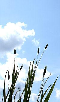 gras-himmel