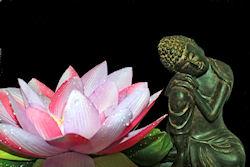seerose-mit-buddha