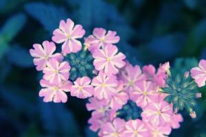 Blütenbiild